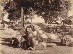 Carved Nundees, Warangal Fort